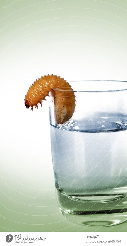 Tequilla ... und weg. Glas Getränk trinken Alkohol Wurm Raupe Spirituosen Larve Schnapsglas