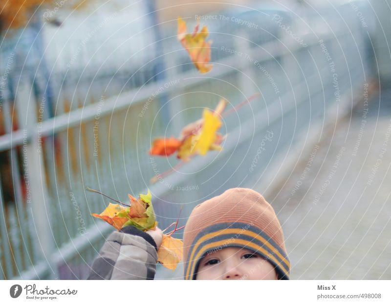Laubschlacht Mensch Kind Freude Blatt Gefühle Herbst Spielen Stimmung Kindheit Fröhlichkeit Mütze Kleinkind Herbstlaub herbstlich Ahornblatt werfen