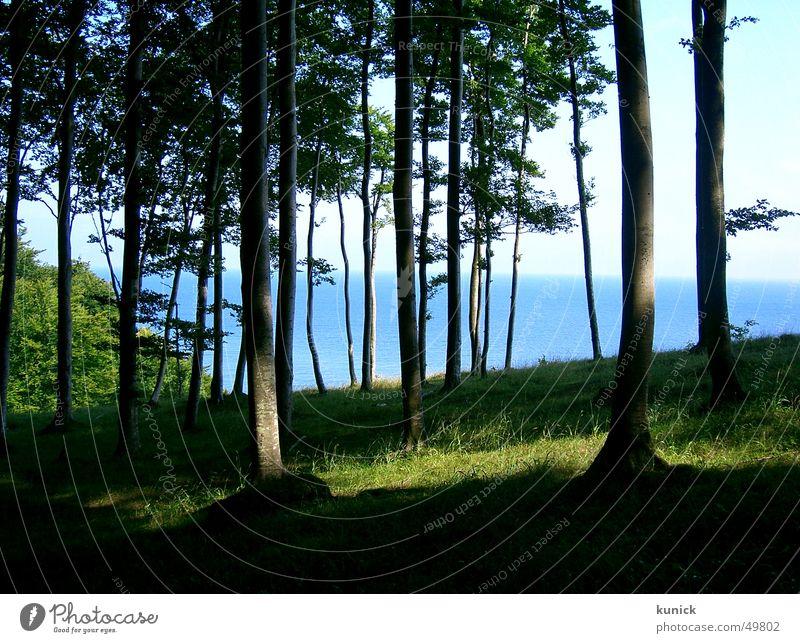 Siehst du das Meer vor lauter Bäumen nicht? Natur Baum Wald Rügen