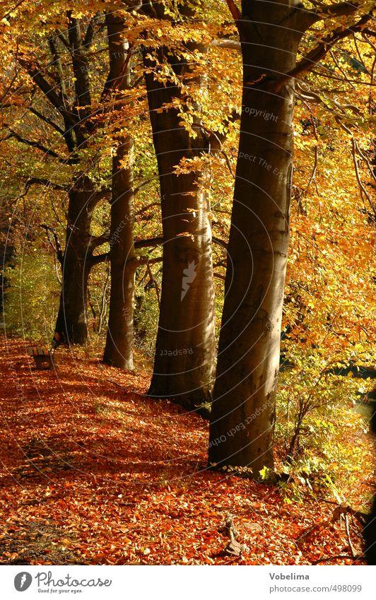 Herbstwald Natur Pflanze Baum rot Wald gelb Umwelt Herbst braun gold