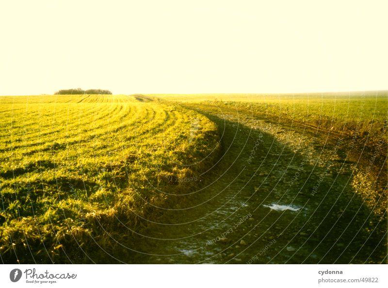 Feldweg Sonne grün Sommer Ferne Straße Wiese Wege & Pfade Landschaft Stimmung