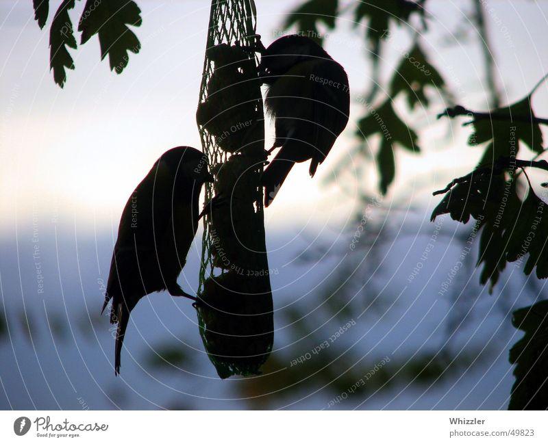 Abendschmankerl Natur Himmel blau ruhig Ernährung Tier Freiheit Luft Vogel fliegen Romantik lecker Appetit & Hunger Abendessen trüb Futter