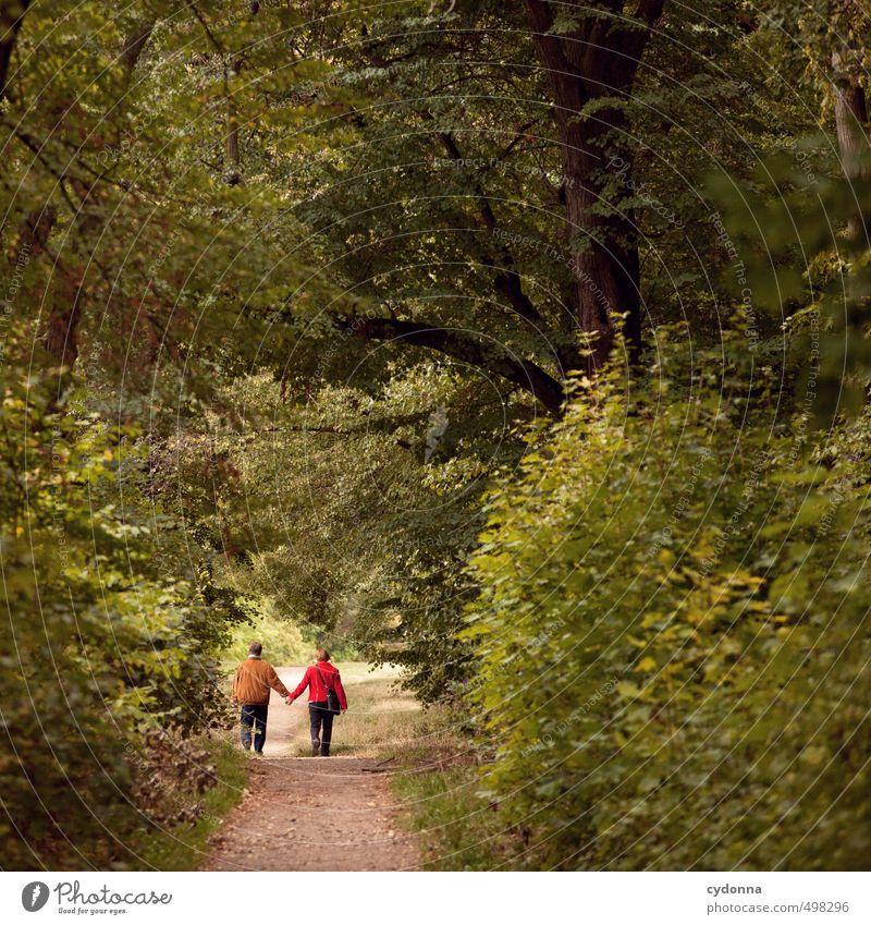 Zu Zweit Mensch Frau Natur Mann Sommer Baum Landschaft Wald Erwachsene Umwelt Leben Liebe Senior Herbst Wege & Pfade Glück