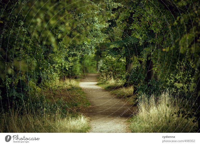 Der Weg Natur grün Sommer Baum Erholung Einsamkeit Landschaft ruhig Blatt Wald Umwelt Leben Wege & Pfade Zeit träumen Idylle
