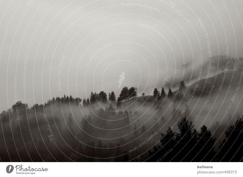 Nebulöös IV Ferien & Urlaub & Reisen Tourismus Berge u. Gebirge wandern Umwelt Natur Landschaft Pflanze Himmel Wolken Herbst Klima Wetter Nebel Alpen hoch