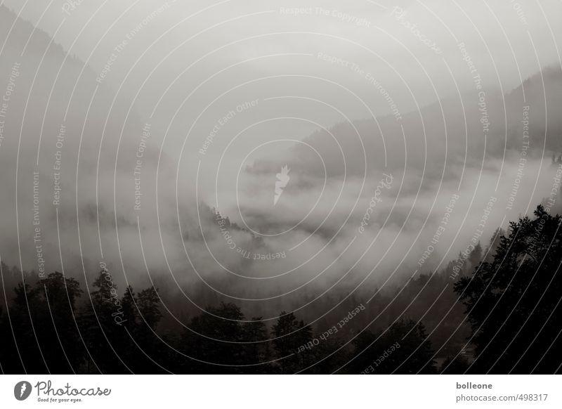 Nebolöös V Himmel Natur Ferien & Urlaub & Reisen Pflanze Landschaft Wolken Ferne dunkel Umwelt Berge u. Gebirge Herbst natürlich Wetter Nebel Klima Tourismus