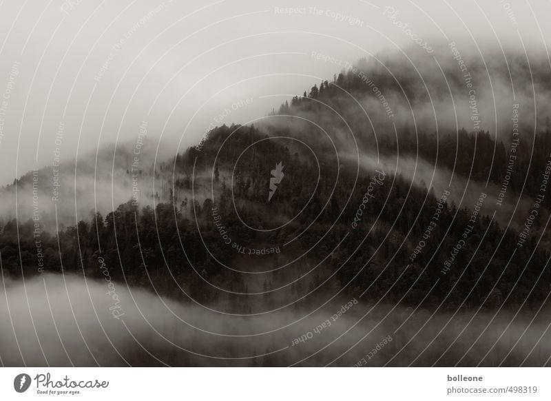 Nebulöös III Himmel Natur Pflanze Einsamkeit Landschaft ruhig Wolken dunkel Umwelt Berge u. Gebirge Herbst Erde Wetter Nebel Alpen Nadelwald