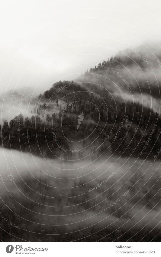 Nebulöös I Umwelt Natur Landschaft Pflanze Himmel Wolken Herbst Wetter Nebel Baum Wald Alpen Berge u. Gebirge Gipfel bedrohlich dunkel Ferne Einsamkeit Ewigkeit