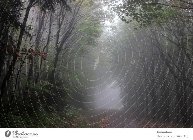 I can see clearly.... Umwelt Natur Herbst schlechtes Wetter Nebel Baum Wald Wege & Pfade ästhetisch bedrohlich dunkel grau grün Gefühle Farbfoto Außenaufnahme