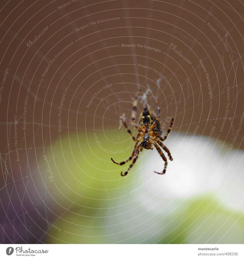 Tekla Tier braun wild Wildtier authentisch Geschwindigkeit bedrohlich nah Aggression Ekel klug Spinne listig