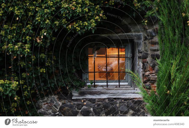 Fenster zum Hof Umwelt Natur Pflanze Herbst Baum Sträucher Blatt Grünpflanze Wildpflanze Menschenleer Burg oder Schloss Park Mauer Wand Stein Sand Glas Stahl