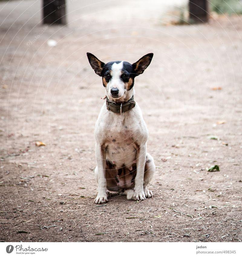 tier | der beste freund Gesicht Fell Tier Hund Tiergesicht 1 beobachten Blick sitzen kuschlig Neugier niedlich trashig Coolness Treue Wachsamkeit ruhig