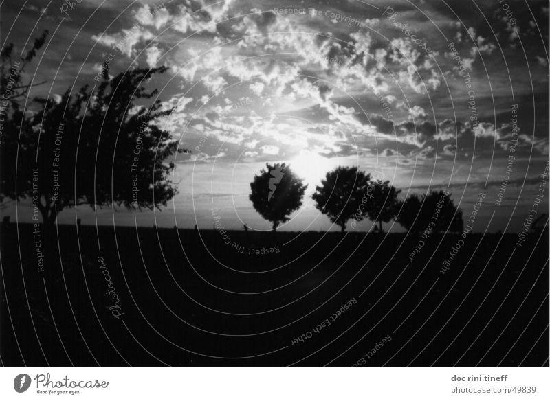 immer der sonne nach Sonnenuntergang Baum Wolken Himmel Weste Schwarzweißfoto sun sunrise sky clouds tree trees