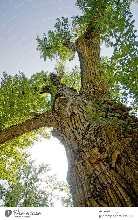 verzweigt Umwelt Natur Pflanze Luft Himmel Wolkenloser Himmel Sonne Sonnenlicht Sommer Wetter Schönes Wetter Wärme Baum Blatt Wildpflanze Garten Wald Holz