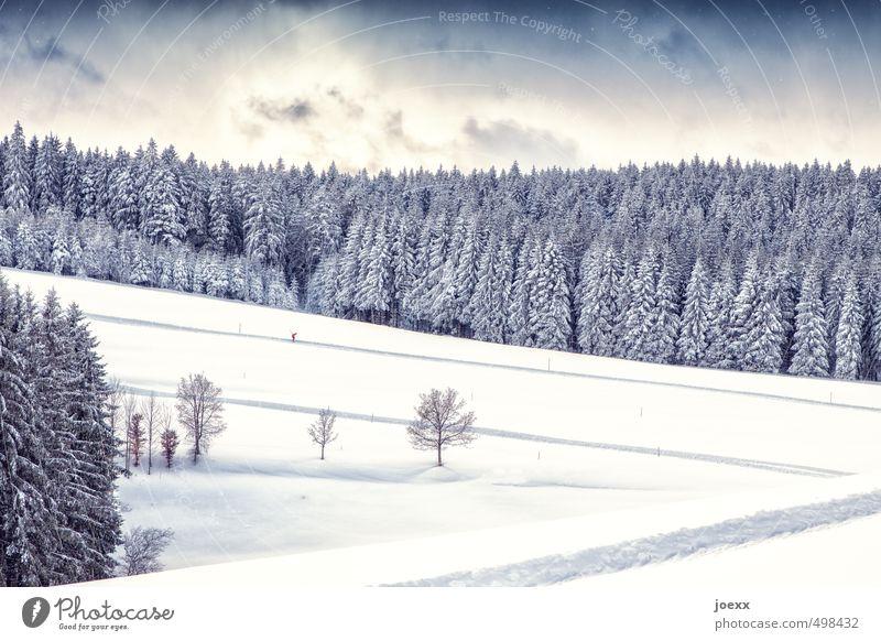 Rutschbahn Winter Schnee Winterurlaub Sport Wintersport Skilanglauf Landschaft Himmel Wolken Schönes Wetter Baum Feld Wald Fitness laufen hell kalt blau grau