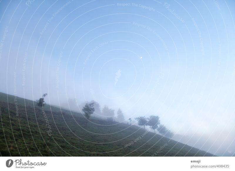 blau & schief Himmel Natur blau Landschaft kalt Umwelt Wiese Herbst natürlich Nebel Wolkenloser Himmel