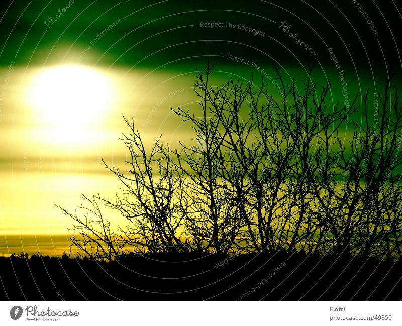 Green Sunshine Baum Sonne grün