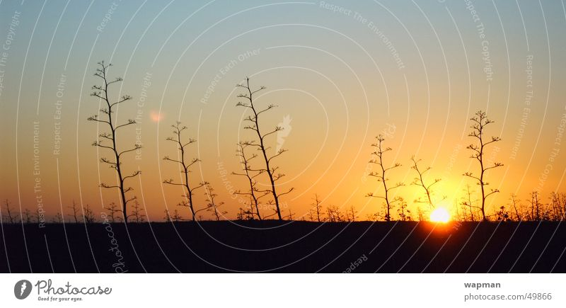 Cabo de Gata Küste groß Almeria Spanien Abenddämmerung Panorama (Bildformat) Kaktus Andalusien Cabo de Gata