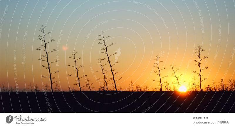 Cabo de Gata Küste groß Almeria Spanien Abenddämmerung Panorama (Bildformat) Kaktus Andalusien