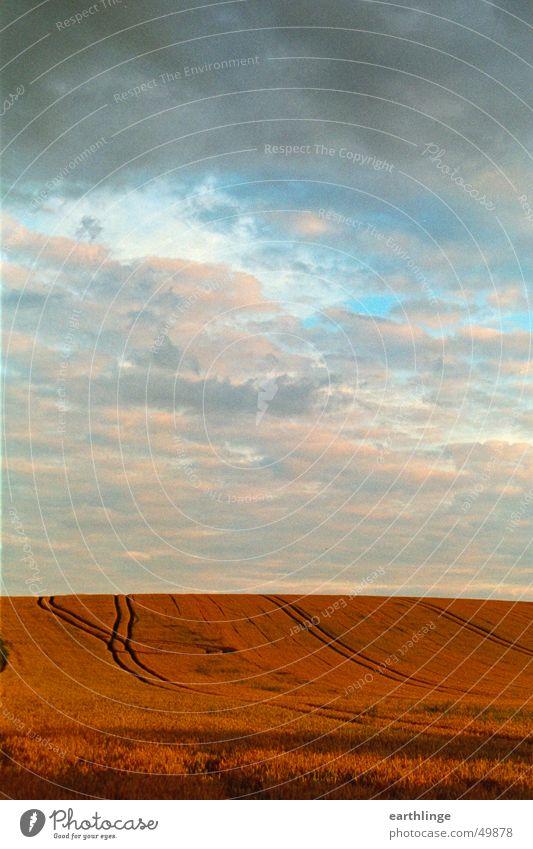 Feldstärke 1 Wolken Horizont rot Hochformat Ferne Himmel Spuren orange blau Getreide Ernte Abend Sommer