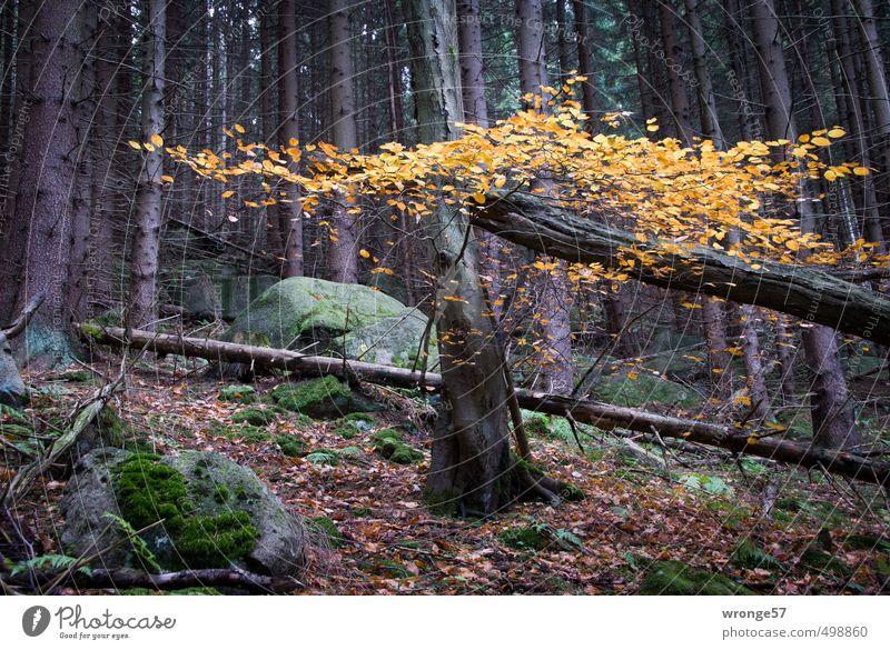 Herbstfarben Natur Pflanze Baum Blatt Laubbaum Wald Hügel Harz natürlich braun gelb Waldboden Herbstlaub herbstlich Mischwald Farbfoto Gedeckte Farben