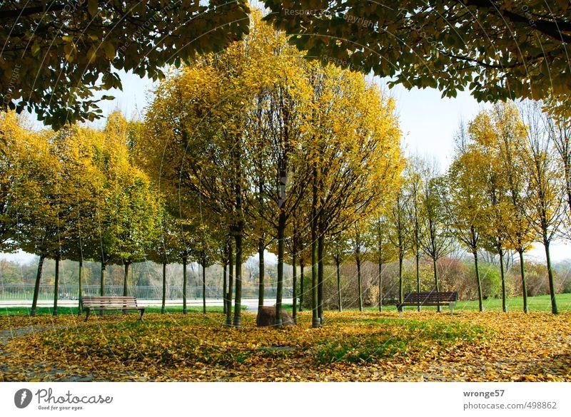 Stadtherbst Natur Pflanze Baum gelb Herbst Deutschland Park Europa Schönes Wetter Platz Flussufer Herbstlaub herbstlich Symmetrie kreisrund