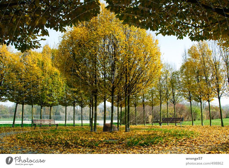 Stadtherbst Pflanze Herbst Schönes Wetter Baum Park Flussufer Magdeburg Deutschland Sachsen-Anhalt Europa Menschenleer Platz mehrfarbig gelb Natur Symmetrie