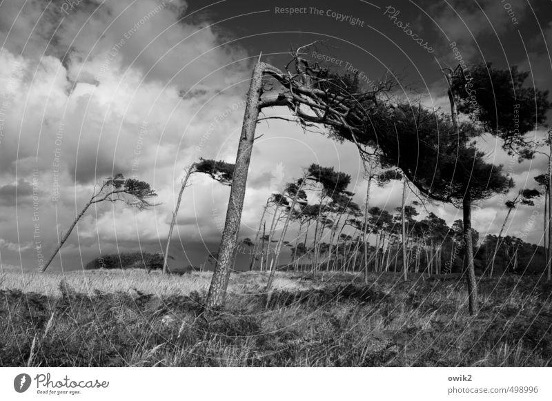 Zugzwang Ausflug Freiheit Umwelt Natur Landschaft Pflanze Himmel Wolken Horizont Klima Wetter Schönes Wetter Wind Sturm Baum Gras Sträucher Wildpflanze