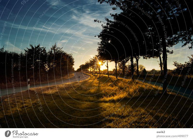 In den Abend Umwelt Natur Landschaft Pflanze Himmel Wolken Horizont Herbst Klima Wetter Schönes Wetter Baum Gras Sträucher Straße Kurve Fahrbahnmarkierung