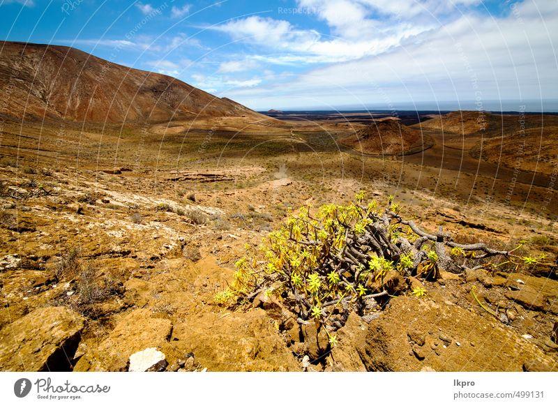Himmel Natur Ferien & Urlaub & Reisen Pflanze Sommer Landschaft Blume Wolken Berge u. Gebirge Stein Sand Felsen braun Park dreckig Tourismus