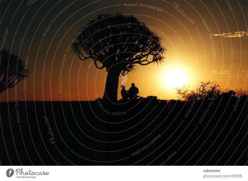 Sonnenuntergang in Namibia Afrika Abenteuer Köcherbaum Romantik Nacht Baum Zusammensein Außenaufnahme Naturschutzgebiet Paar Freiheit Wüste Ferne leer Glück