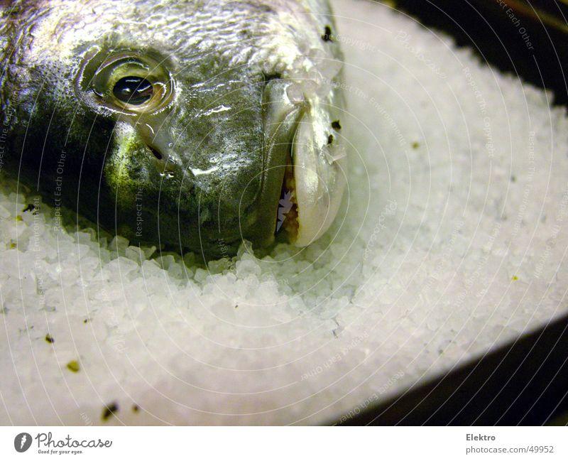 fischsein Wasser Meer Auge Tod See frisch Fisch Kochen & Garen & Backen Zähne Küche Gebiss Korn lecker Angeln Fleisch