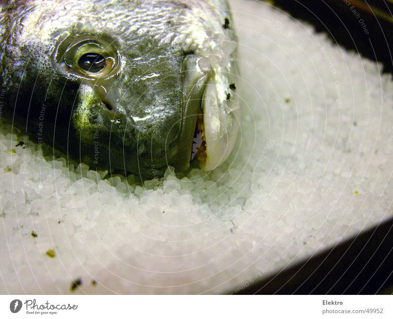 fischsein Wasser Meer Auge Auge Tod See frisch Fisch Kochen & Garen & Backen Zähne Küche Gebiss Korn lecker Angeln Fleisch