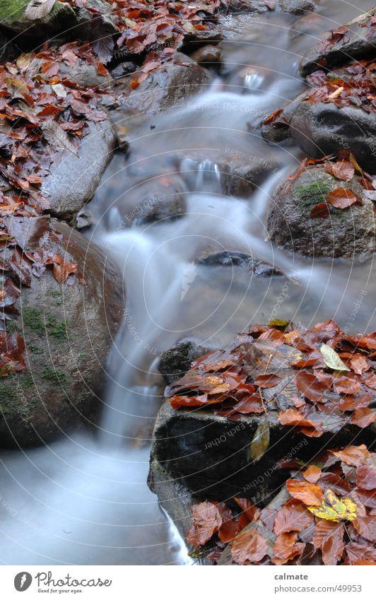 - herbstliches wassertreiben - Blatt Herbst Bach Langzeitbelichtung Wasser Fluss Felsen Stein Wasserfall wasserfälchen