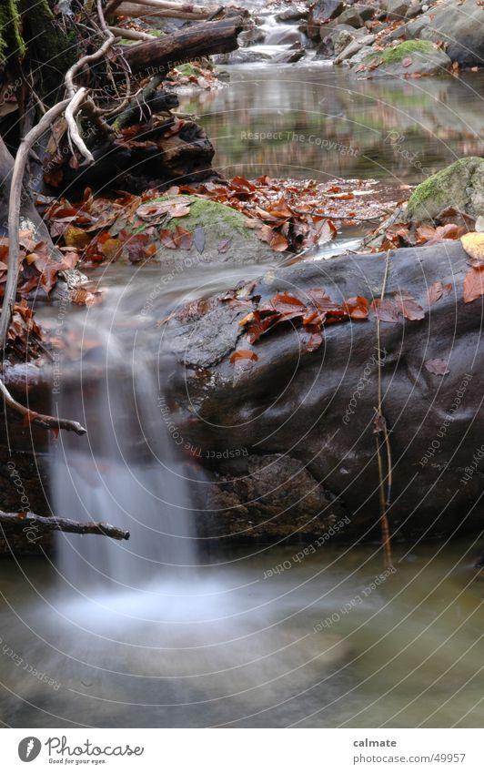 - herbstliches gewässer - Blatt Herbst Bach Langzeitbelichtung Wasser Fluss Felsen Stein Wasserfall wasserfälchen