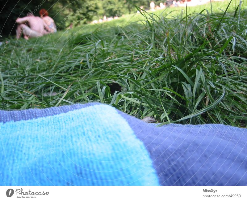 Auf der Liegewiese Sommer Ferien & Urlaub & Reisen Erholung Wiese Gras Paar Park liegen Freizeit & Hobby beobachten Sonnenbad Kuscheln Handtuch Wochenende