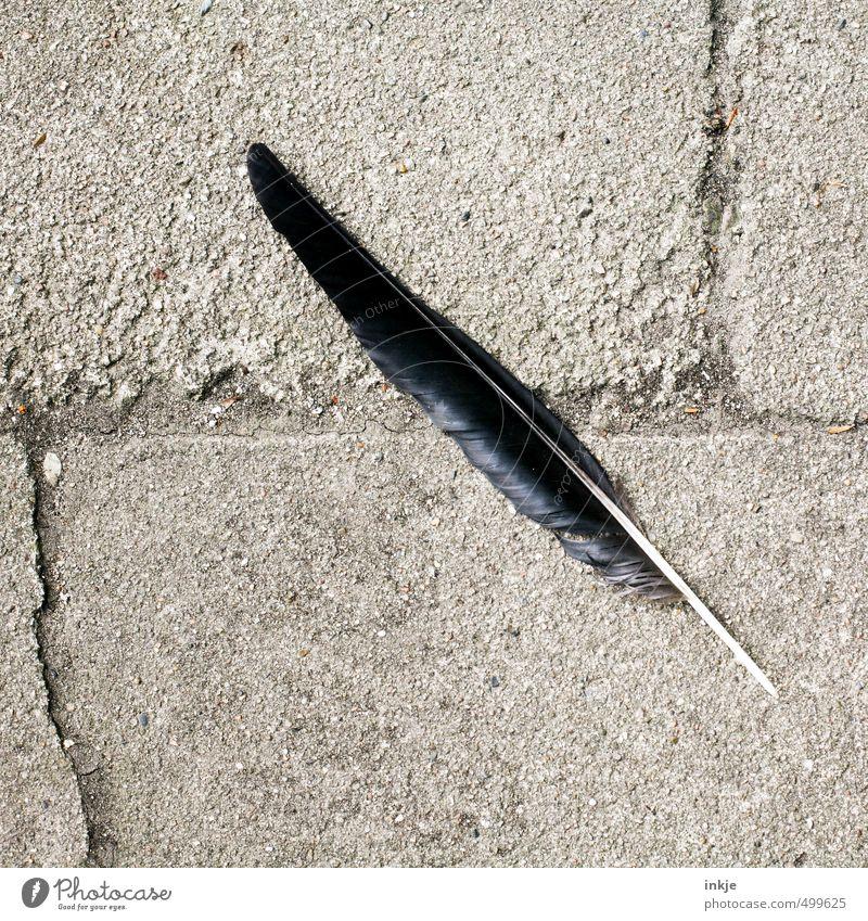 \ Menschenleer Platz Boden Feder Stein Beton liegen einfach schwarz Tod Vergänglichkeit Wandel & Veränderung einzeln Farbfoto Gedeckte Farben Außenaufnahme