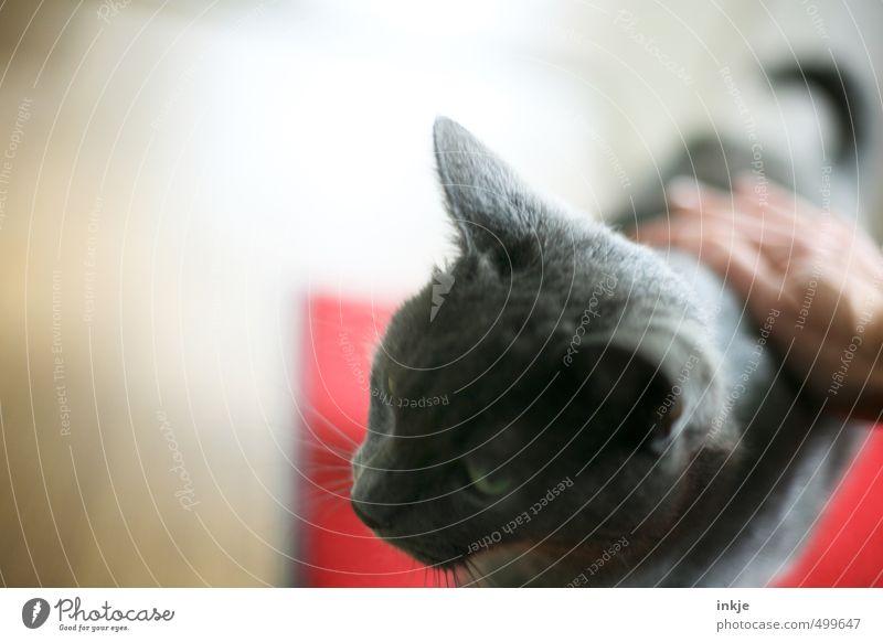Haus | tier Katze Tier Gefühle Stimmung Freundschaft Zufriedenheit Warmherzigkeit weich berühren streichen Vertrauen Tiergesicht Haustier Geborgenheit Sympathie