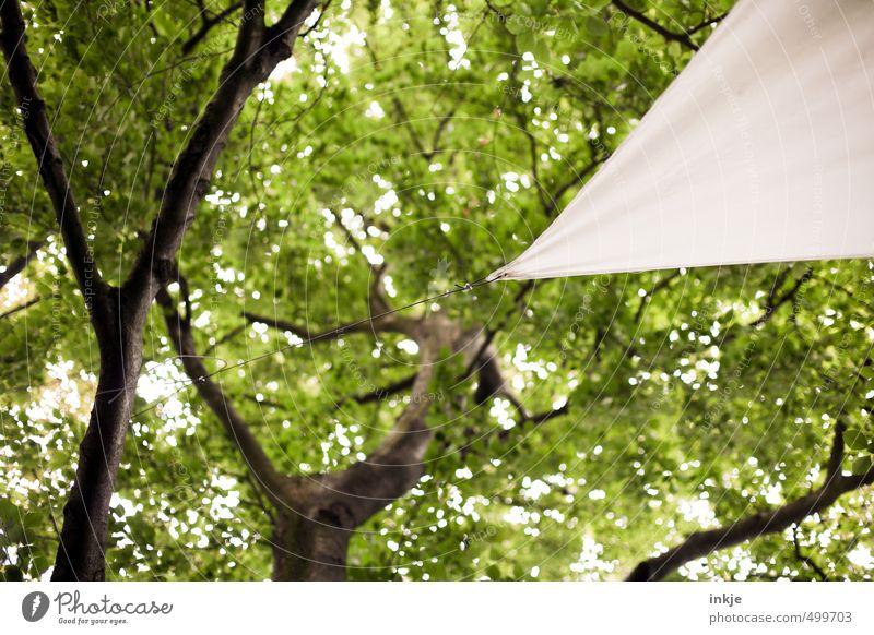 Sonnensegel Umwelt Natur Sommer Schönes Wetter Baum Blatt Baumkrone Blätterdach Garten Park Seil Dreieck festhalten hängen eckig grün weiß Idylle Schutz