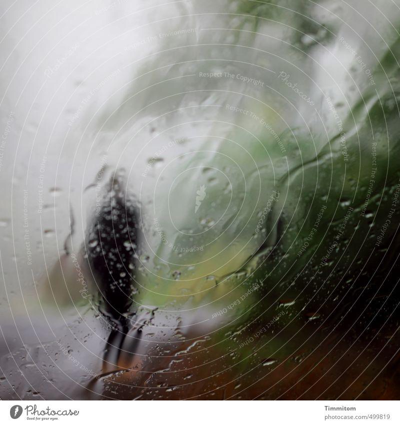 Es gibt solche Tage. Mensch Frau Erwachsene 1 Umwelt Natur Landschaft Himmel Herbst schlechtes Wetter Nebel Regen Baum Hügel Straße stehen warten dunkel nass