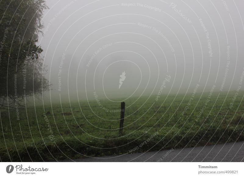 Orientierung im Nebel. Umwelt Natur Landschaft Himmel Herbst schlechtes Wetter Baum Gras Straße dunkel einfach grau grün Gefühle Wiese Pfosten Farbfoto