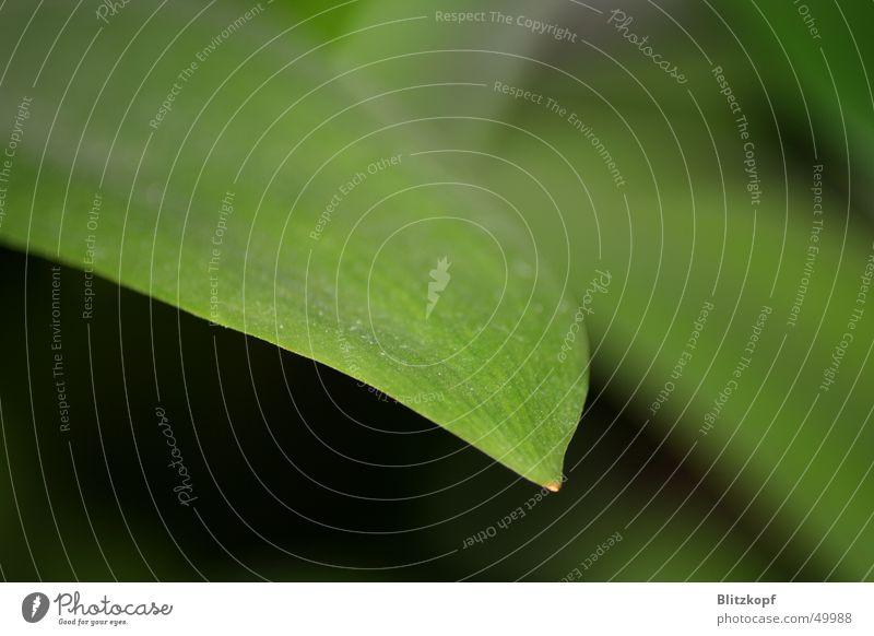 Makro - Blatt Blume grün Pflanze Blatt Staub