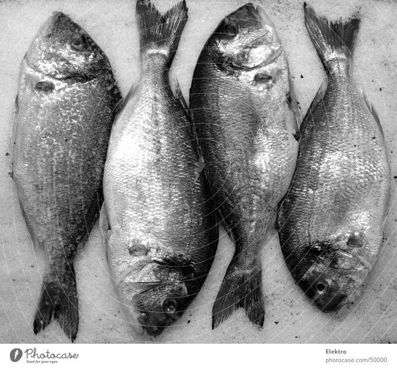 was interessiert mich der Fleischskandal Wasser Meer Auge Tod liegen Ordnung frisch Fisch Kochen & Garen & Backen Küche 4 Gebiss Korn lecker Angeln