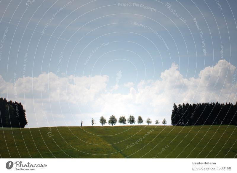 Die Reihe der Gratulanten ist lang ... Himmel Natur blau grün weiß Pflanze Baum Landschaft Wolken Ferne Wald außergewöhnlich Feld stehen ästhetisch genießen