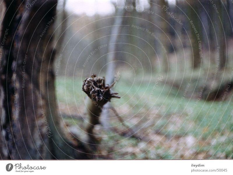 Ast Baum Wald frontal Natur Maske
