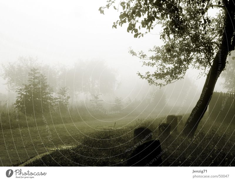 Morgengrauen. Nebel Herbst Baum dunkel Trauer Wege & Pfade Straße Traurigkeit