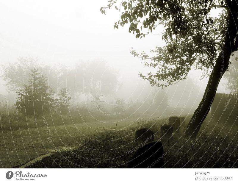Morgengrauen. Baum Straße dunkel Herbst Traurigkeit Wege & Pfade Nebel Trauer