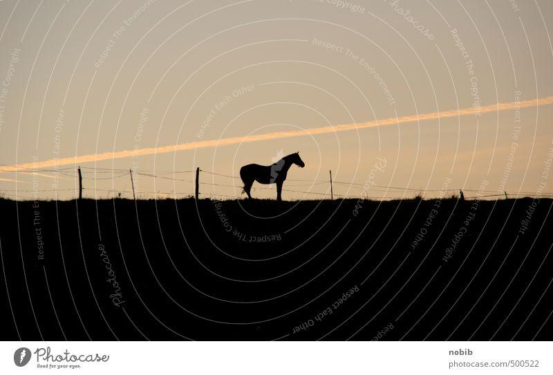 einsames pferd Erholung Landschaft Tier schwarz gelb Horizont Stimmung braun Freizeit & Hobby Feld warten stehen Pferd Weide Gelassenheit Wolkenloser Himmel