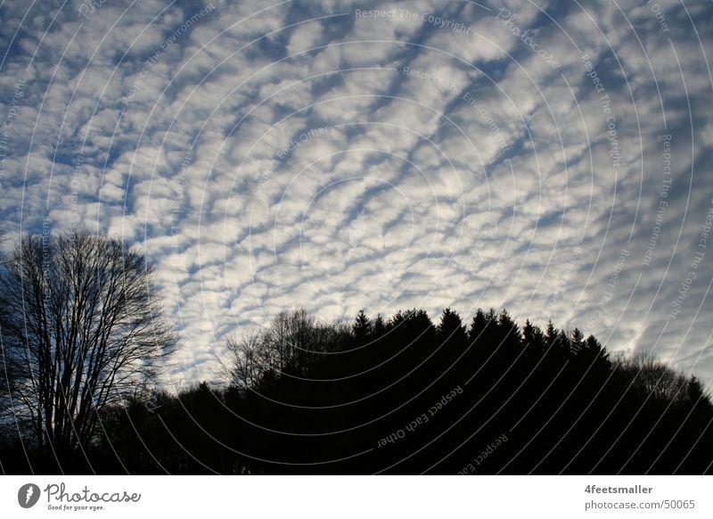 Lambs Clouds Himmel weiß Baum Sonne blau schwarz Wolken Kumulus Altokumulus floccus