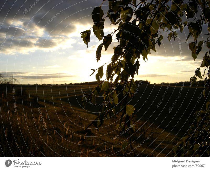 Untergehende Sonne Birke Blatt verdeckt Baum Sonnenuntergang Gras Romantik Außenaufnahme Himmel blau Natur Berge u. Gebirge Landschaft Abend